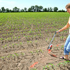 5-30-12<br /> Jessica Guffey marks the corn field that will be the maze when they open later this summer.<br /> KT photo | Tim Bath