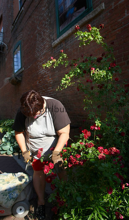 5-19-12<br /> Voluteers plant flowers and other plantings in the downtown area on Saturday morning. Diana Lambuth trimming a rose bush in the alley across Main Street from the courthouse.<br /> KT photo | Tim Bath