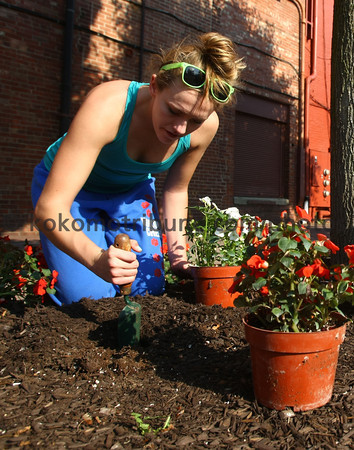 5-19-12<br /> Voluteers plant flowers and other plantings in the downtown area on Saturday morning. Brooke Wininger<br /> KT photo | Tim Bath
