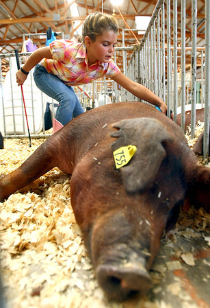 7-11-12<br /> Howard County 4h Fair - Swine or hog judging<br /> Karley Ford, 8, brushing her cousins pig.<br /> KT photo | Tim Bath
