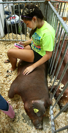 7-11-12<br /> Howard County 4h Fair - Swine or hog judging<br /> Kamey Daniels, 12, texting while sitting in the stall with her pig.<br /> KT photo | Tim Bath