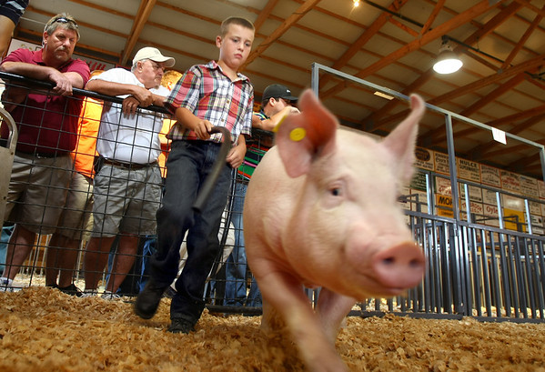 7-11-12<br /> Howard County 4h Fair - Swine or hog judging<br /> William Lovelace showing one of his animals.<br /> KT photo | Tim Bath