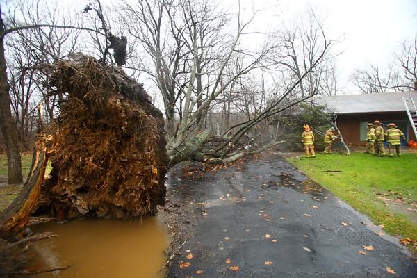 Tree Down Oakbrook