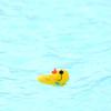 Duck Derby