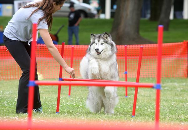 Dog Olympics