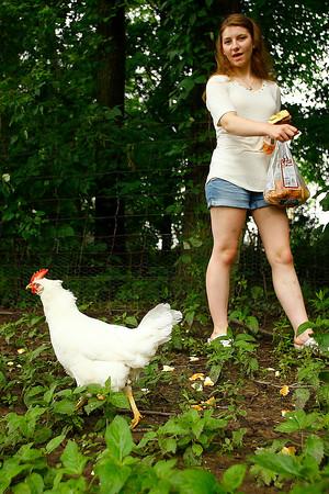 Fair Chickens