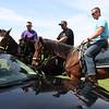 Police horse training