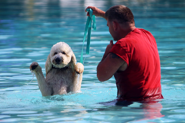 Pooches in the Pool