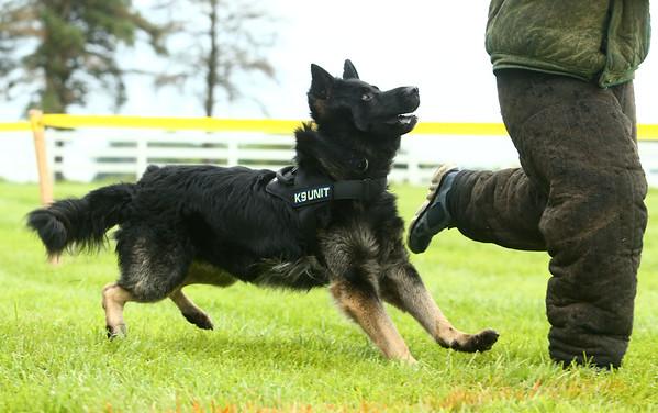 Hard Dog-Fast Dog