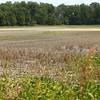Dried up field