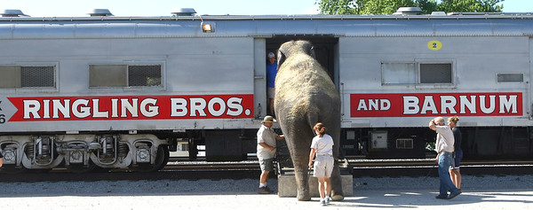 5-30-12<br /> Ringling Bros. and Barnum and Bailey Circus train stopped in Peru to fuel up, fill water and fix a generator. They also let the animals out for exercise and food. Hundreds stopped by the Norfolk Southern train yard to see the elephants on Wednesday. Being reloaded on the train cars.<br /> KT photo | Tim Bath