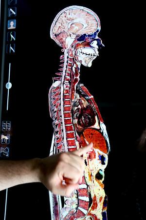 Anatomy Simulator