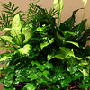 Planter, or a dish garden, which consists of five different varieties of indoor plants.<br /> Kelly Lafferty Gerber | Kokomo Tribune