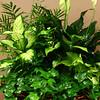 Planter, or a dish garden, which consists of five different varieties of indoor plants.<br /> Kelly Lafferty Gerber | Kokomo Tribune