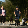 Walkers hit the trail as they walk their dogs in a loop around Foster Park during Barktoberfest on Saturday, October 7, 2017.<br /> Kelly Lafferty Gerber | Kokomo Tribune