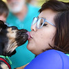 Megan Myers gets kisses from her pug mix, Mojo Jo-Jo during the kissing contest at Barktoberfest in Foster Park on Saturday, October 7, 2017.<br /> Kelly Lafferty Gerber | Kokomo Tribune