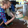 Simba, a chihuahua, gives a highfive to his owner Amber Parsons during the talent and trick contest at Barktoberfest in Foster Park on Saturday, October 7, 2017.<br /> Kelly Lafferty Gerber | Kokomo Tribune