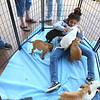Molly Sallee, a Humane Society volunteer, hangs out with the pitbull-boxer mix puppies that were up for adoption during Barktoberfest in Foster Park on Saturday, October 7, 2017.<br /> Kelly Lafferty Gerber | Kokomo Tribune