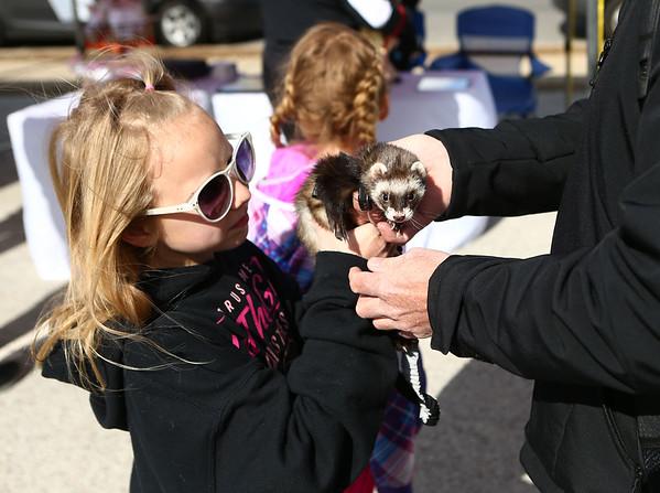 Bella Stoeckley, 10, brought Ziggy, her pet ferret, to opening day of Kokomo's Farmers Market on Saturday, April 28, 2018.<br /> Kelly Lafferty Gerber   Kokomo Tribune