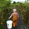 "Bucket in hand, 4-year-old Leo Massey walks through the rows of tomato plants to tend to the fallen tomatoes and weeds as he works in the garden that provides vegetables for his West Middleton produce stand called ""Leo's Produce Stand"" on Wednesday, August 1, 2018.<br /> Kelly Lafferty Gerber 