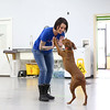 Bre Altherr highfives Midge, a Redbone Coonhound, as she works with her at Sit Means Sit, a dog training facility in Kokomo.<br /> Kelly Lafferty Gerber | Kokomo Tribune