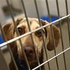 Kokomo Humane Society at their new location 729 East Hoffer Street is officially open.<br /> Kelly Lafferty Gerber | Kokomo Tribune