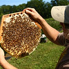 Bob Johnson takes a closer look at some of his honeybees at Nektar Flow Farms on July 6, 2018.<br /> Kelly Lafferty Gerber | Kokomo Tribune