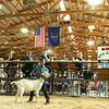 Livestock Auction at the Howard County 4-H Fair on Thursday, July 12, 2018.<br /> Kelly Lafferty Gerber | Kokomo Tribune