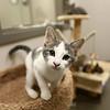 The kitten colony at the new location of the Kokomo Humane Society, 729 East Hoffer Street, on July 19, 2018.<br /> Kelly Lafferty Gerber | Kokomo Tribune
