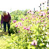 Joan Johnson picks herbs at her organic farm she shares with her husband Bob, Nektar Flow Farms, on July 6, 2018.<br /> Kelly Lafferty Gerber | Kokomo Tribune
