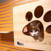The cat colony at the Kokomo Humane Society's new location, 729 East Hoffer Street, on Thursday, July 19, 2018.<br /> Kelly Lafferty Gerber | Kokomo Tribune