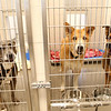 Dogs hang out in the adoptable dog area of the new location of the Kokomo Humane Society at 729 East Hoffer Street on Thursday, July 19, 2018.<br /> Kelly Lafferty Gerber | Kokomo Tribune