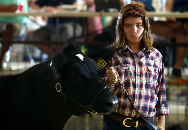 Samantha Ellis shows her steer during the Livestock Auction at the Howard County 4-H Fair on Thursday, July 12, 2018.<br /> Kelly Lafferty Gerber | Kokomo Tribune