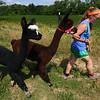 Alpaca for Fair