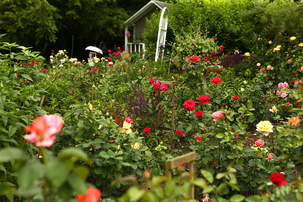 Susan Jordan's Old Fashioned Garden on June 5, 2018.<br /> Kelly Lafferty Gerber | Kokomo Tribune