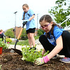 Emilie Leger, 9, plants flowers as Madison Smith, 9, digs a hole to plant more in the flower bed across from Central Middle School for Keep Kokomo Beautiful's annual planting day on Saturday morning, May 19, 2018.<br /> Kelly Lafferty Gerber | Kokomo Tribune