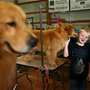 8-year-old Quinton Rolli, from Lynn, gets kisses from his grandmother's golden retriever, Kenni, during the Kokomo Kennel Club dog show on Saturday, May 19, 2018.<br /> Kelly Lafferty Gerber | Kokomo Tribune