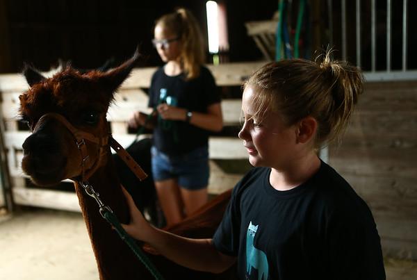10-year-old Tessa Ortman pets Kinji, the alpaca, at Heritage Farms on May 30, 2018.<br /> Kelly Lafferty Gerber | Kokomo Tribune