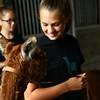 Emily Keeney, 13, smiles at Tango the alpaca at Heritage Farms on May 30, 2018.<br /> Kelly Lafferty Gerber | Kokomo Tribune