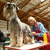 Cheryl Crompton rooms her standard schnauzer from Sweden, Ariel, who has the registered name of Velvet Dandys Little Mermaid at Stahlkrieger, at the Kokomo Kennel Club dog show on Saturday, May 19, 2018.<br /> Kelly Lafferty Gerber | Kokomo Tribune