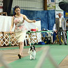 13-year-old Ava Engel,from Indianapolis, shows her papillon Sue in the juniors division of the Kokomo Kennel Club dog show on Saturday, May 19, 2018.<br /> Kelly Lafferty Gerber | Kokomo Tribune