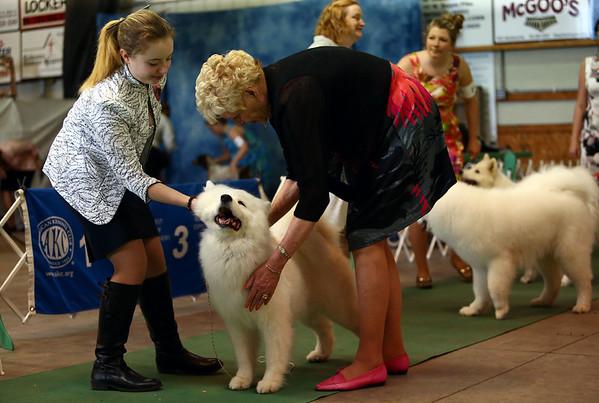 Kokomo Kennel Club dog show on Saturday, May 19, 2018.<br /> Kelly Lafferty Gerber   Kokomo Tribune