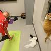 Cat yoga at the Kokomo Humane Society on Tuesday, November 13, 2018.<br /> Kelly Lafferty Gerber | Kokomo Tribune