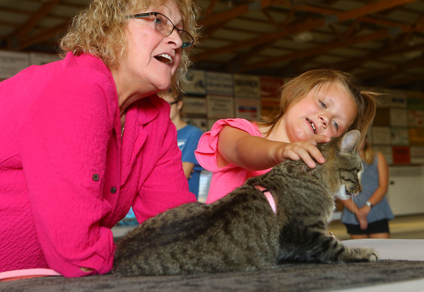 Mini-4Her Kybree Reeser, 7, pets her cat Squeakers as cat show judge Joy Fabbri-Coombs talks to the audience about what she looks for during a cat show on Friday, July 5, 2019. The cat show was one of the pre-fair activites of the Howard County 4-H Fair.<br /> Kelly Lafferty Gerber | Kokomo Tribune