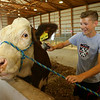 Dylan Collins, 15, prepares his cow for the Howard County 4-H Livestock Auction on Thursday, July 11, 2019.<br /> Kelly Lafferty Gerber | Kokomo Tribune