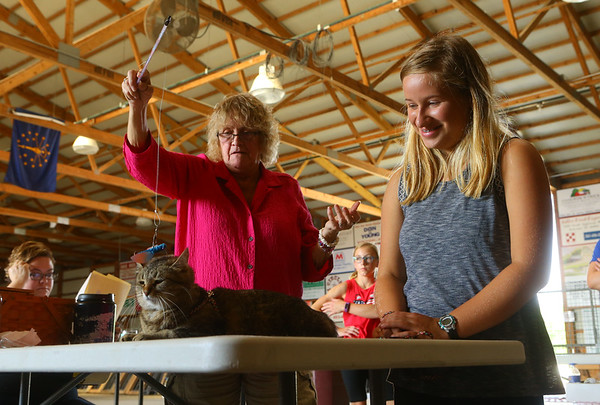 The cat show, on Friday, July 5, 2019, was one of the pre-fair activites of the Howard County 4-H Fair.<br /> Kelly Lafferty Gerber | Kokomo Tribune