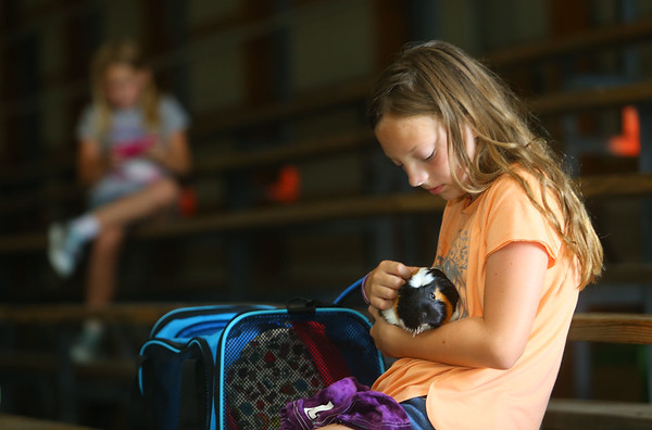 Meredith Kelly, 11, pets her guinea pig, Spice, as she waits in the bleachers for the final results of the small animal show on Tuesday, July 2, 2019, one of the Howard County 4-H Fair's pre-fair activities.<br /> Kelly Lafferty Gerber   Kokomo Tribune