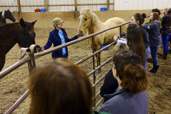 Horse Therapy Class