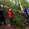 Tri-Central 8th graders spent the morning cleaning up the nature trail on the west part of the school property on Sept. 27, 2019. Jaaron Helnerick, Ethan Tragesser and Aidan Johnson move some branches off one of the lesser used trails.<br /> Tim Bath | Kokomo Tribune