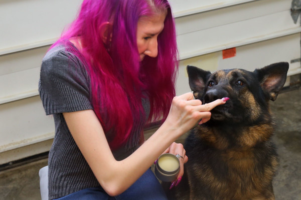 Lizzy Lewellyn is a 17-year-old student who started her own dog-product business. With her dog Atrid using one of her products on February 18, 2020. <br /> Tim Bath | Kokomo Tribune
